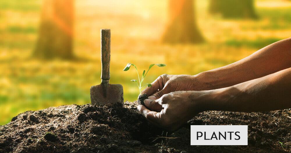 plants-sale